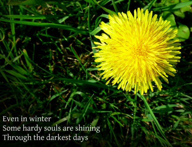 Even in winter Some hardy souls are shining Through the darkest days