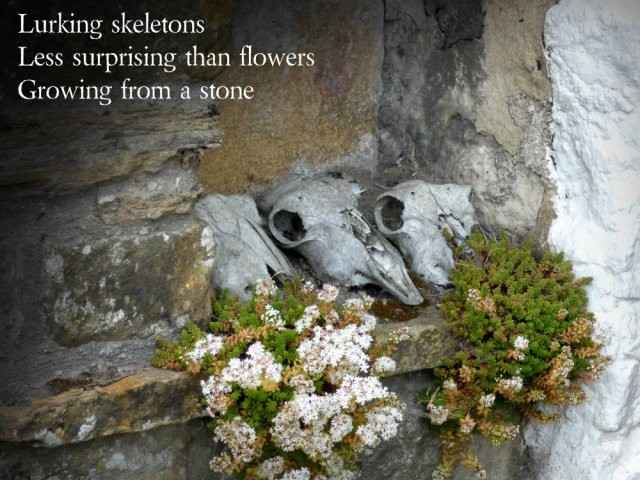 Lurking skeletons Less surprising than flowers Growing from a stone