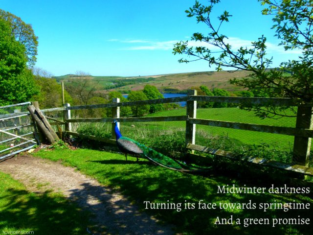 Midwinter darkness Turning its face towards springtime And a green promise