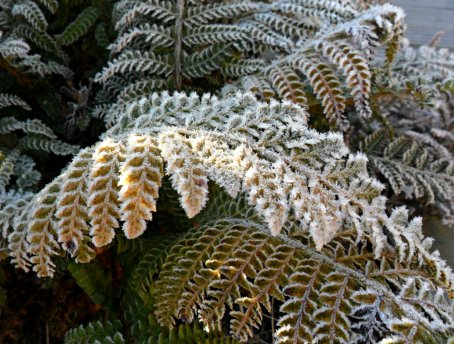 frost leaves (4)
