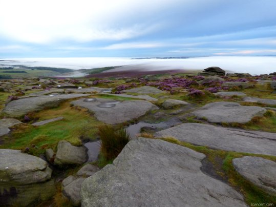 heather 2015 derbyshire, higger tor, beeley circle, edensor, bak 089
