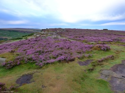 heather 2015 derbyshire, higger tor, beeley circle, edensor, bak 102