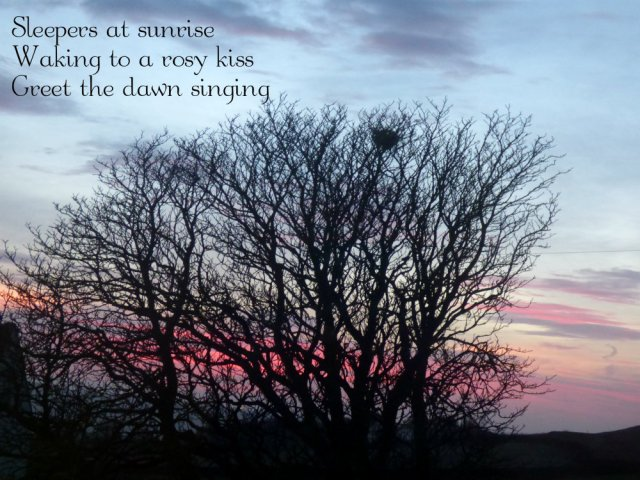 Sleepers at sunrise Waking to a rosy kiss Greet the dawn singing