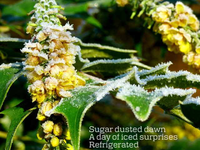 Sugar dusted dawn A day of iced surprises Refrigerated