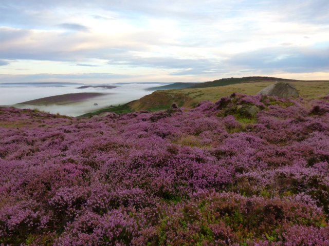 heather 2015 derbyshire, higger tor, beeley circle, edensor, bak 036