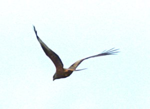 kites 328