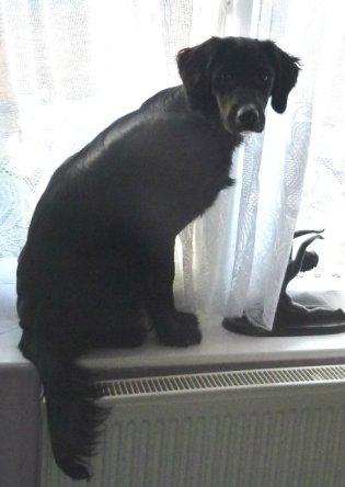 ani window