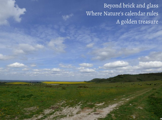 Beyond brick and glass Where Nature's calendar rules A golden treasure
