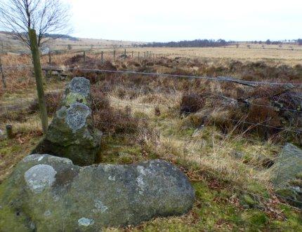 derbyshire lambs hawk kestrel crone stone tideswell lillingstone 003