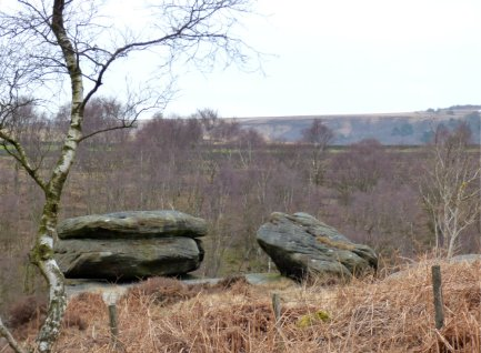derbyshire lambs hawk kestrel crone stone tideswell lillingstone 004