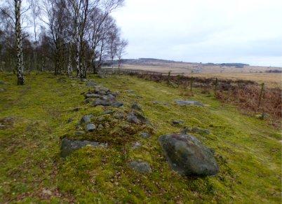 derbyshire lambs hawk kestrel crone stone tideswell lillingstone 005