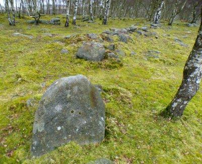 derbyshire lambs hawk kestrel crone stone tideswell lillingstone 006