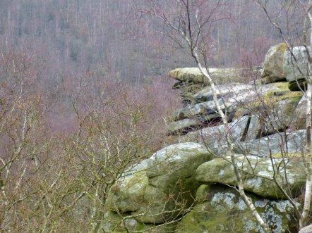derbyshire lambs hawk kestrel crone stone tideswell lillingstone 013