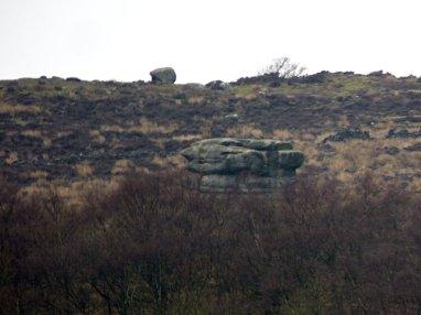 derbyshire lambs hawk kestrel crone stone tideswell lillingstone 018