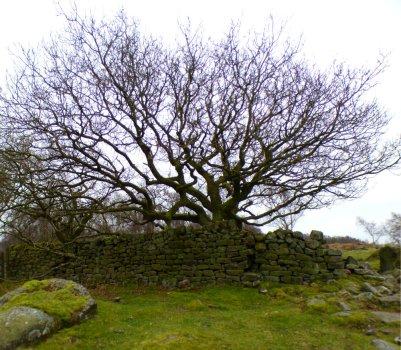 derbyshire lambs hawk kestrel crone stone tideswell lillingstone 020