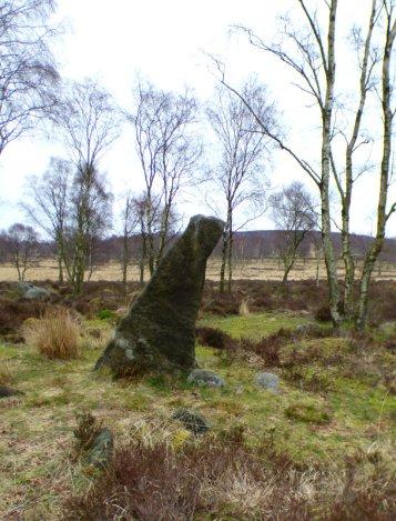 derbyshire lambs hawk kestrel crone stone tideswell lillingstone 031