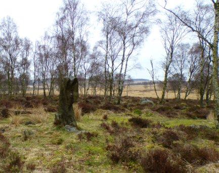 derbyshire lambs hawk kestrel crone stone tideswell lillingstone 038