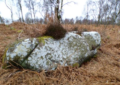 derbyshire lambs hawk kestrel crone stone tideswell lillingstone 051