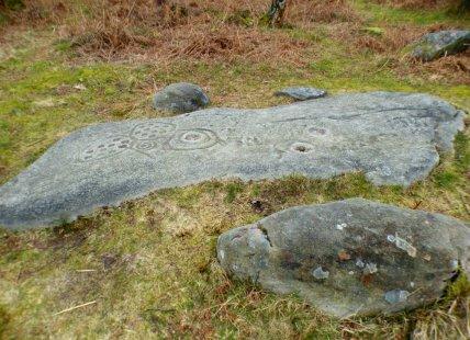 derbyshire lambs hawk kestrel crone stone tideswell lillingstone 055