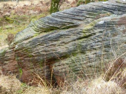 derbyshire lambs hawk kestrel crone stone tideswell lillingstone 058