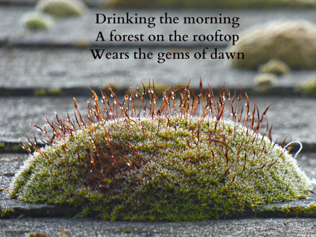 Drinking the morning A forest on the rooftop Wears the gems of dawn