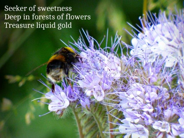 Seeker of sweetness Deep in forests of flowers treasure liquid gold