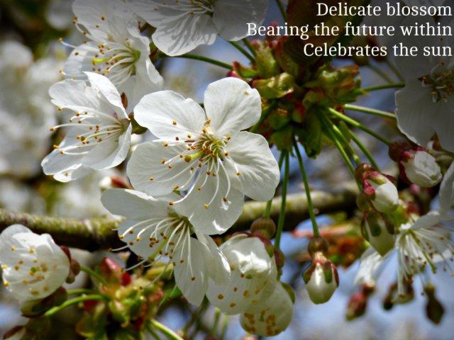 Delicate blossom Bearing the future within Celebrates the sun
