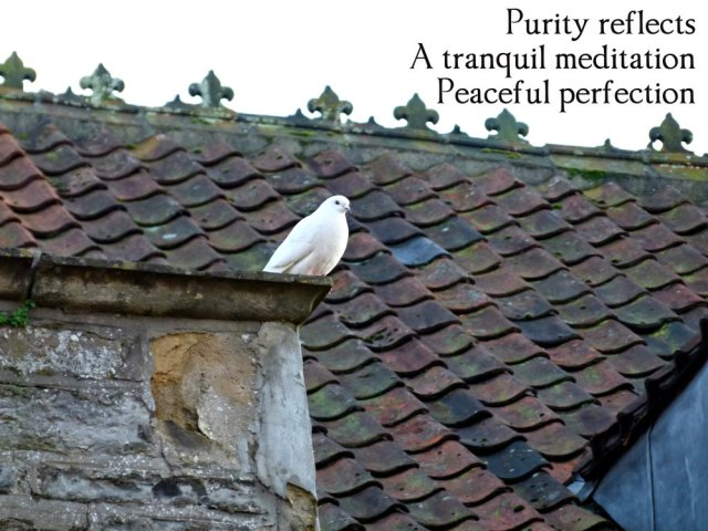 purity reflects, a tranquil meditation, peaceful perfection