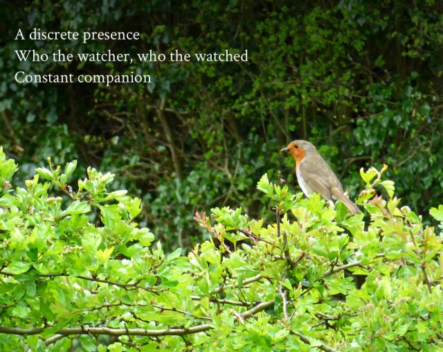 A discrete presence Who the watcher, who the watched Constant companion