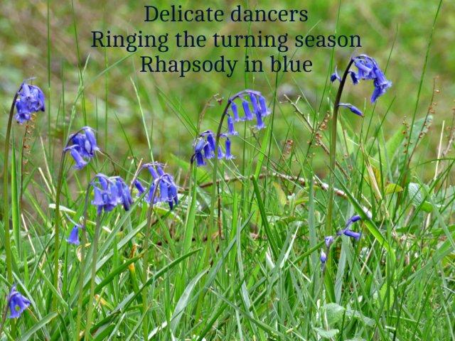 Delicate dancersRinging the turning season Rhapsody in blue