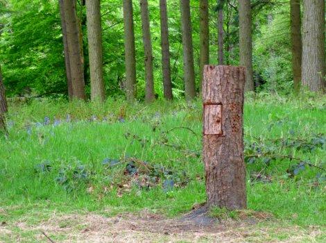 derbyshire ladybower bluebells water dambusters barbrook 3 wildflowers 001 (148)