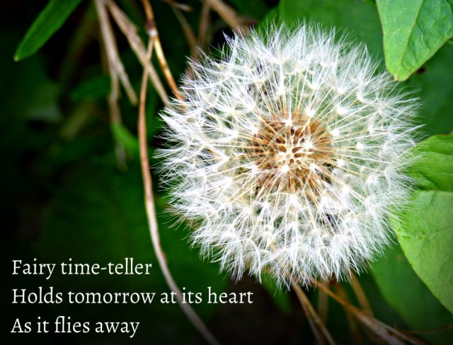 Fairy time-teller Holds tomorrow at its heart As it flies away