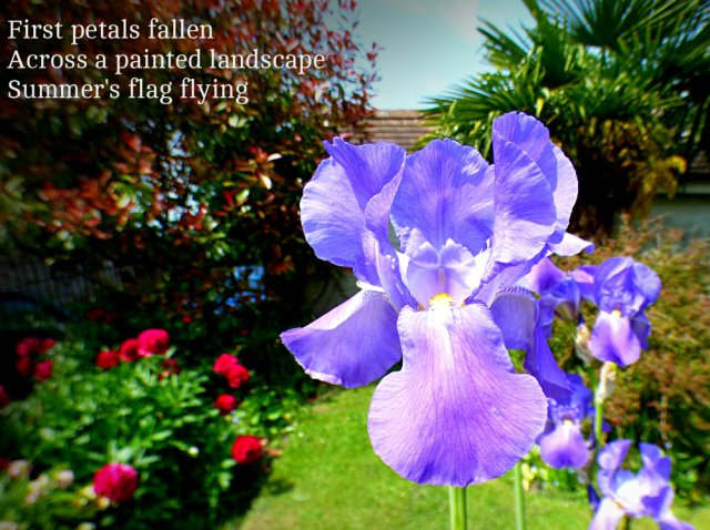 First petals fallen Across a painted landscape Summer's flag flying