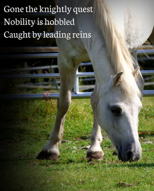Gone the knightly quest Nobility is hobbled Caught by leading reins