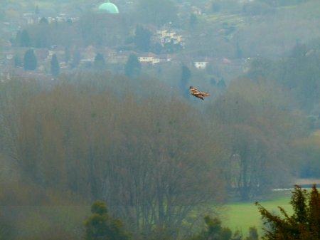 kites 271