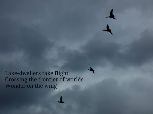 Lake-dwellers take flight Crossing the frontier of worlds Wonder on the wing