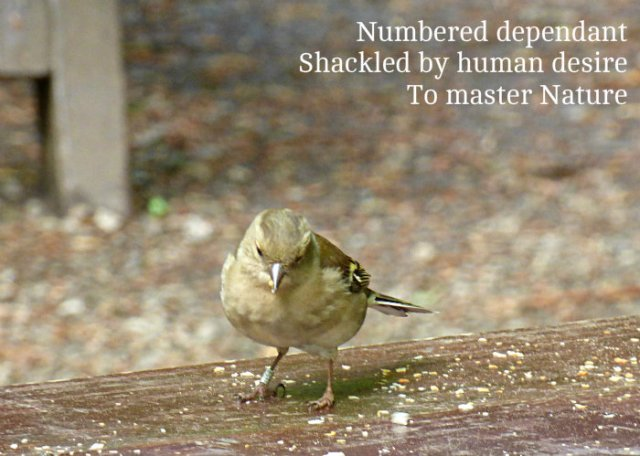 Numbered dependant Shackled by human desire To master Nature