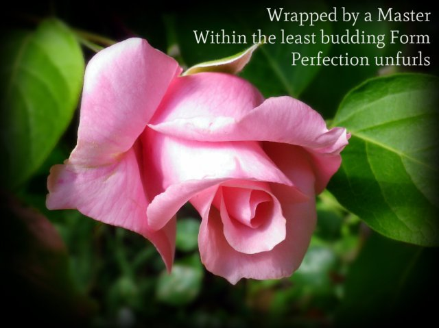 wrapped by a master, within the least budding form, perfection unfurls