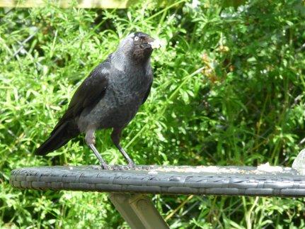 birds 090