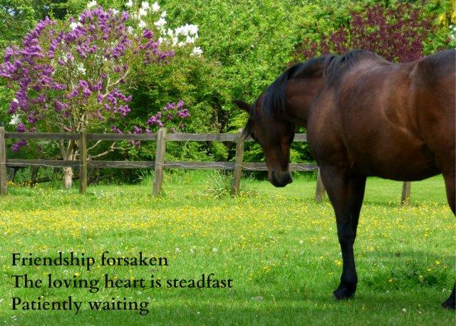 Friendship forsaken The loving heart is steadfast Patiently waiting