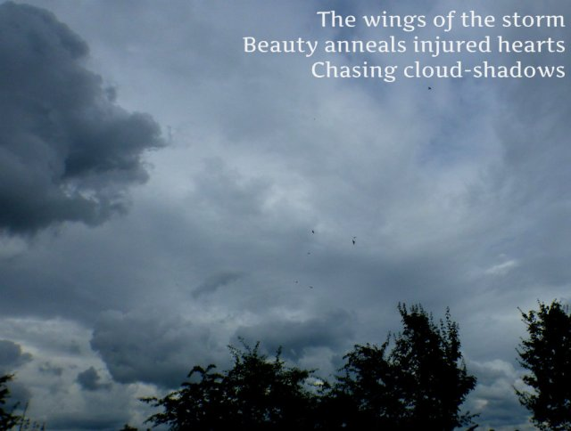 The wings of the storm Beauty anneals injured hearts Chasing cloud-shadows