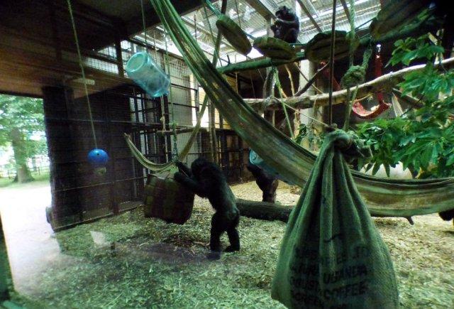 zoo whipsnade nick home kite 043