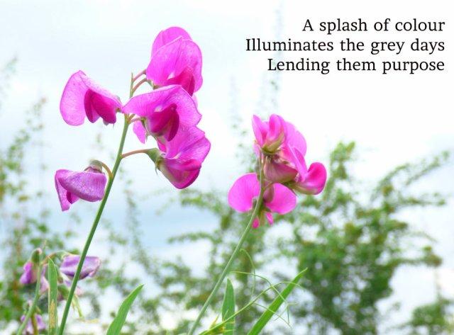 A splash of colour Illuminates the grey days Lending them purpose