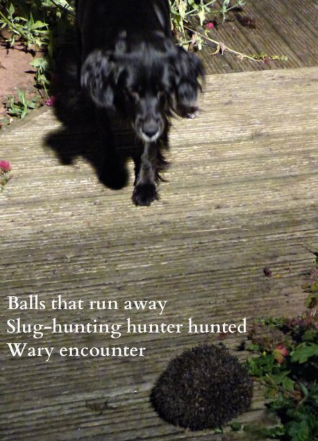 Balls that run away Slug-hunting hunter hunted Wary encounter
