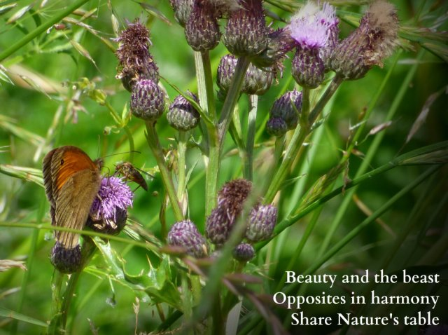 Beauty and the  beast Opposites in harmony Share Nature's table