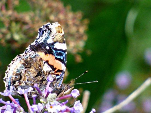 butterflies pagoda 024