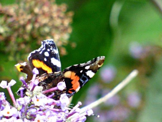 butterflies pagoda 028