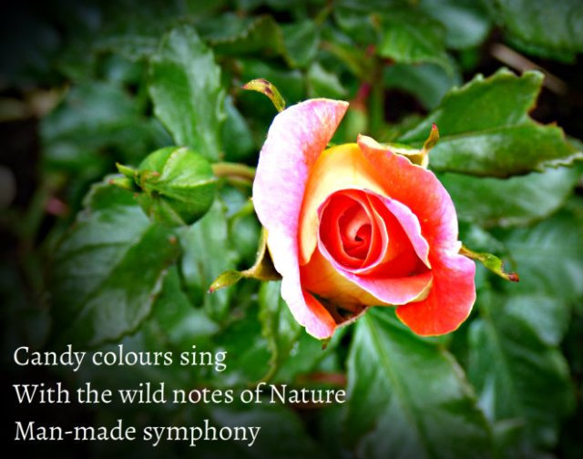 Candy colours sing With the wild notes of Nature Man-made symphony