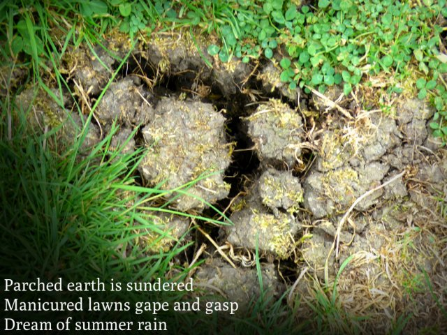 Parched earth is sundered Manicured lawns gape and gasp Dream of summer rain
