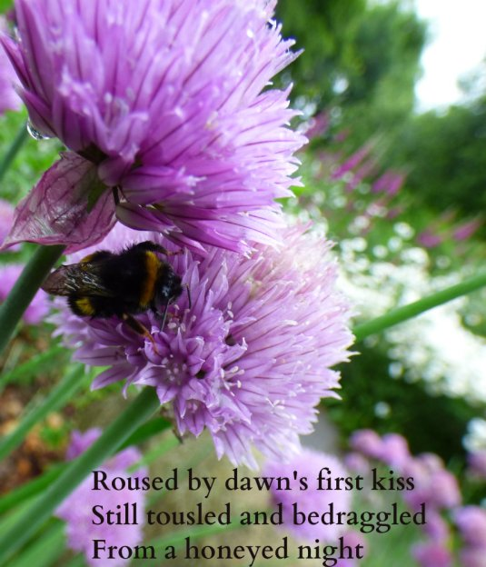 Roused by dawn's first kiss Still tousled and bedraggled From a honeyed night